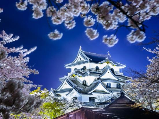 Замок Хіконе Японія